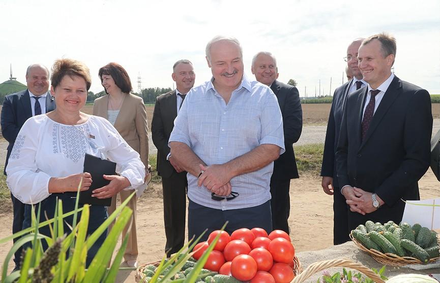 Лукашенко: «Самое святое – стабилизационные фонды. Чтобы у нас был картофель лучших сортов». Подробности визита Президента в Смолевичский район