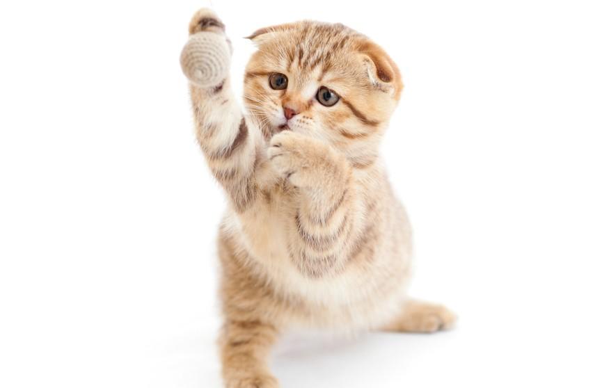 Кошка танцевала с шестом – весь интернет в восторге. Это обязательно нужно увидеть! (ВИДЕО)