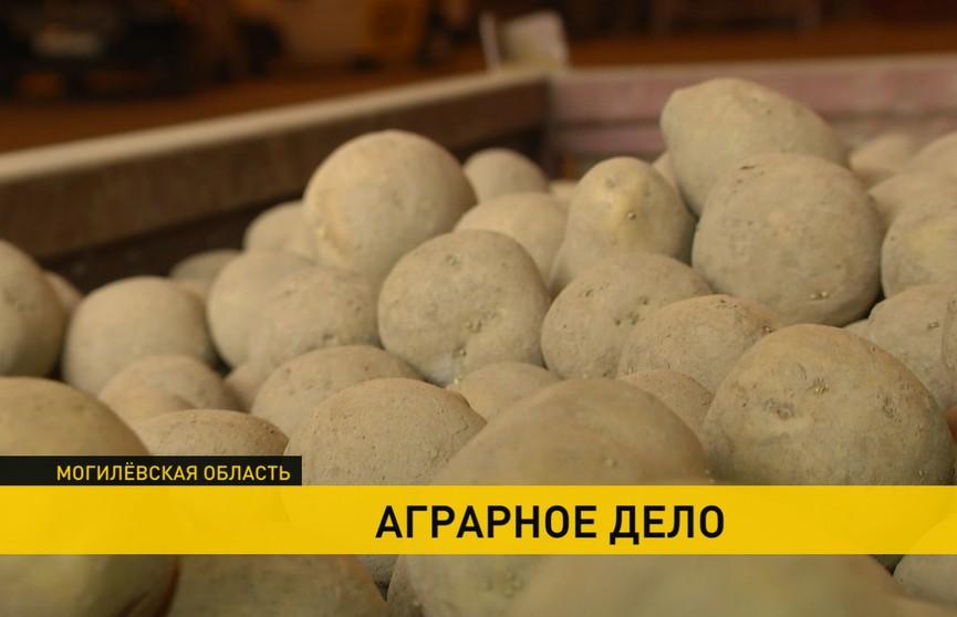 Посевная-2020: и в будни, и в праздники. Как работают белорусские фермеры?
