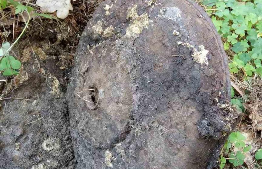 В Беловежской пуще обнаружили противотанковую мину времен Второй мировой войны