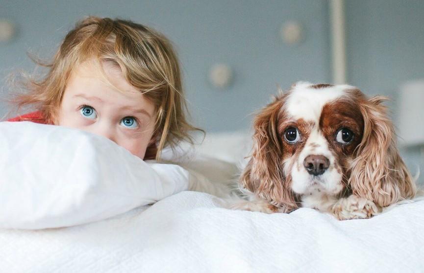 Внешность обманчива: собаки, которые «симпатяги», но на самом деле – самые агрессивные