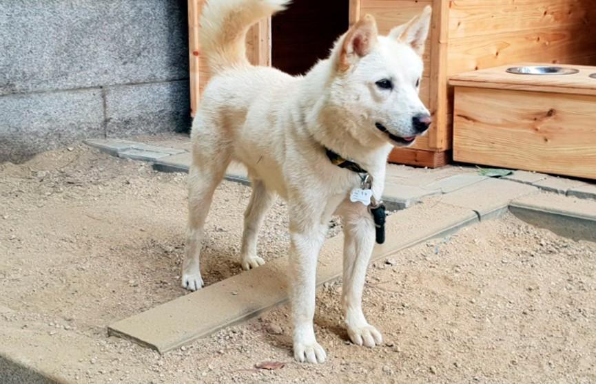 Ким Чен Ын подарил президенту Южной Кореи двух охотничьих собак