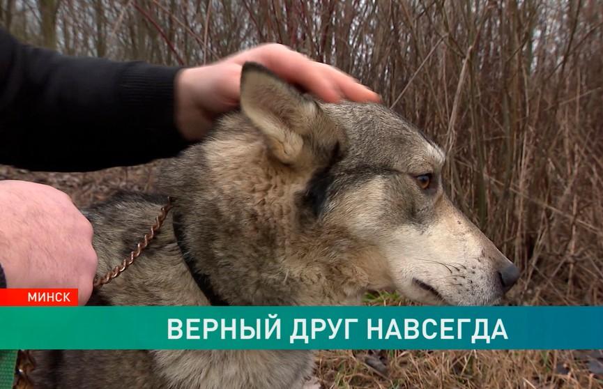 Белорусский Хатико: потерянный 2,5 года назад пес вернулся к своему хозяину в Вилейском районе