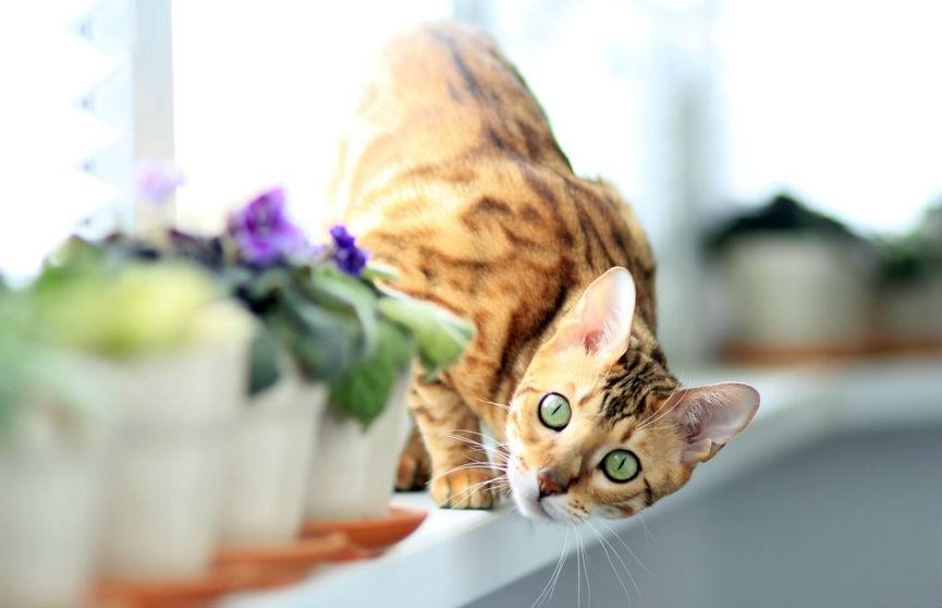 Кошка затопила дом, пока хозяйка вышла в магазин (ВИДЕО)