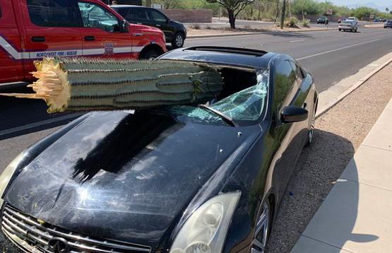 Гигантский кактус пробил лобовое стекло Infiniti в Америке
