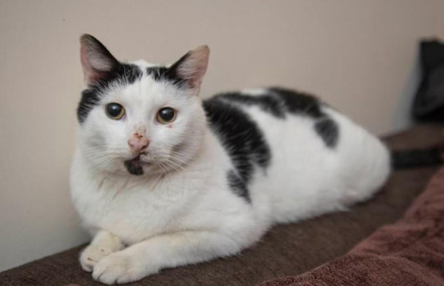 Кот вернулся к своей хозяйке спустя три года