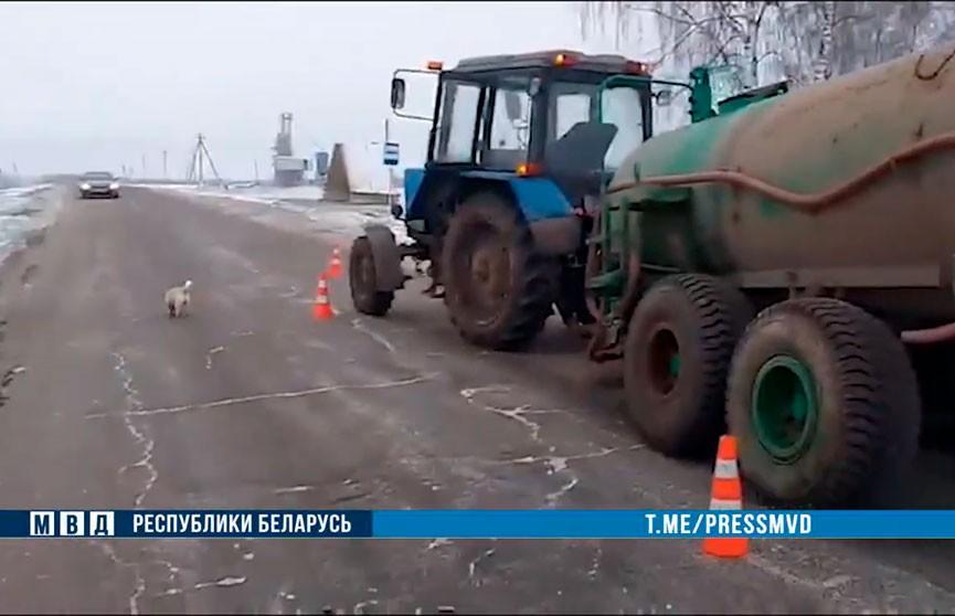 Трактор сбил семилетнюю девочку в Могилевском районе