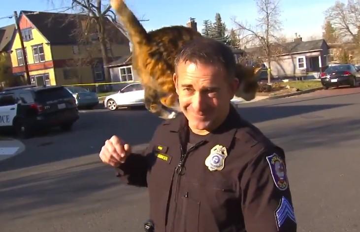 Попала на экраны: кошка сорвала интервью полицейского (ВИДЕО)