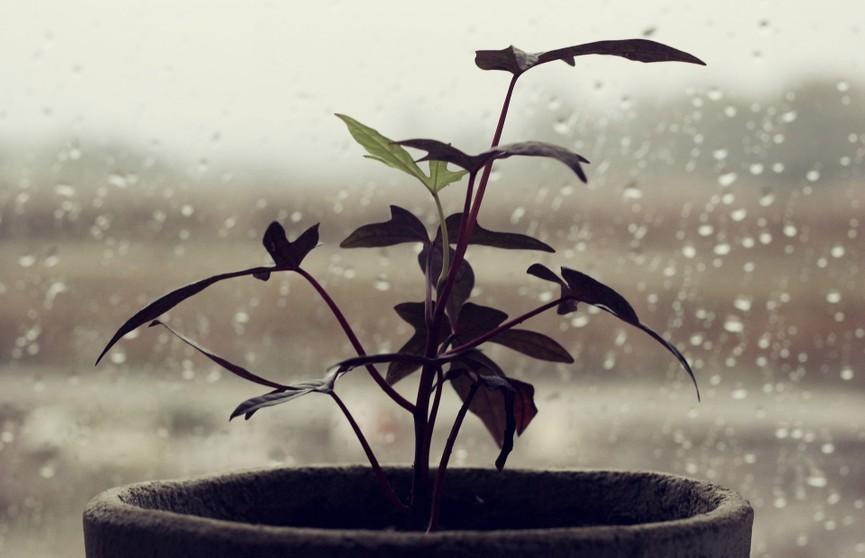 Парень снял видео, на котором его домашние растения странно себя «ведут»