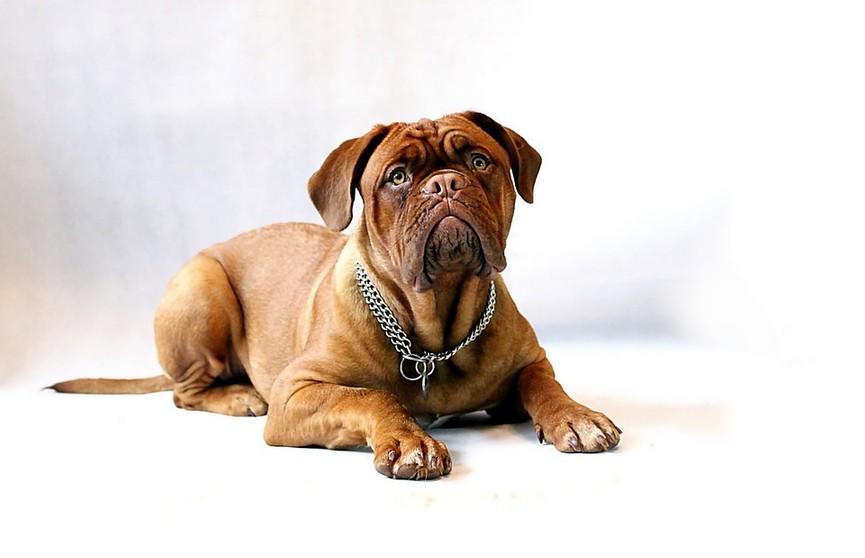 Пес, который боится чистить уши, рассмешил Сеть. Посмотрите, какой милый!