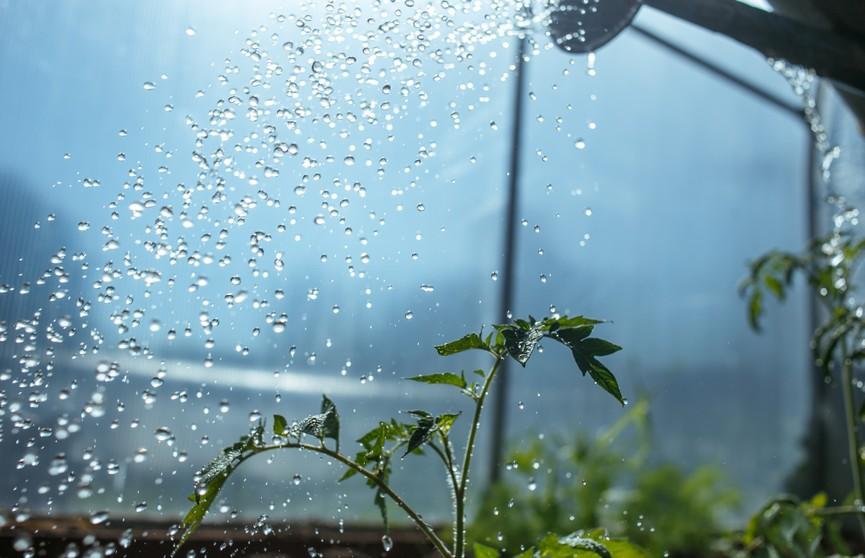Как поливать огород в жару? Советы садовода