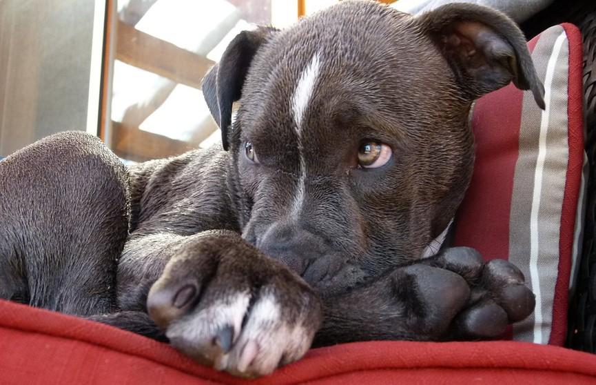 Хозяин притворился, что не видит свою собаку, но тут же пожалел об этом. Смотрите, что произошло!