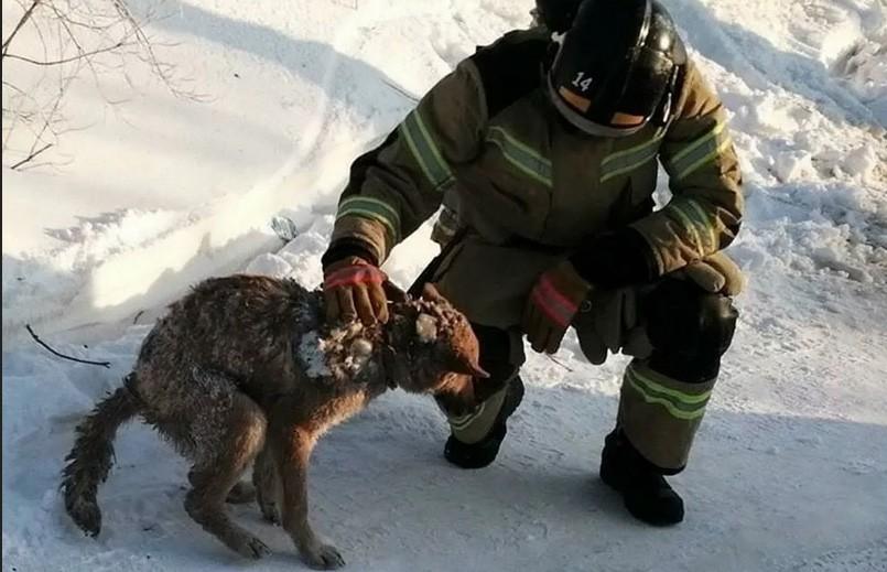 В России спасли собаку через два дня после пожара в жилом доме. Все это время она была под завалами