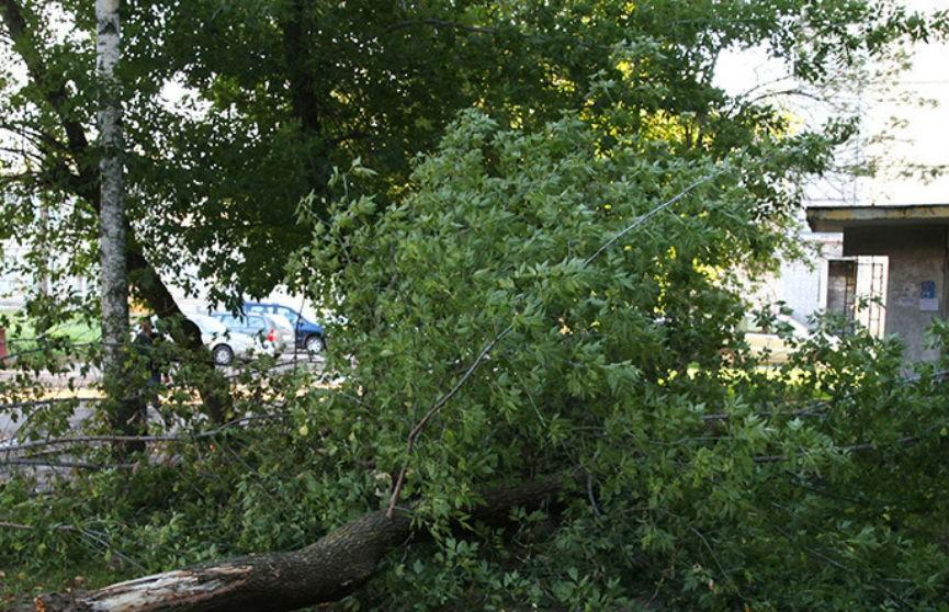 Сильный ветер повредил более 20 домов в трех районах Беларуси