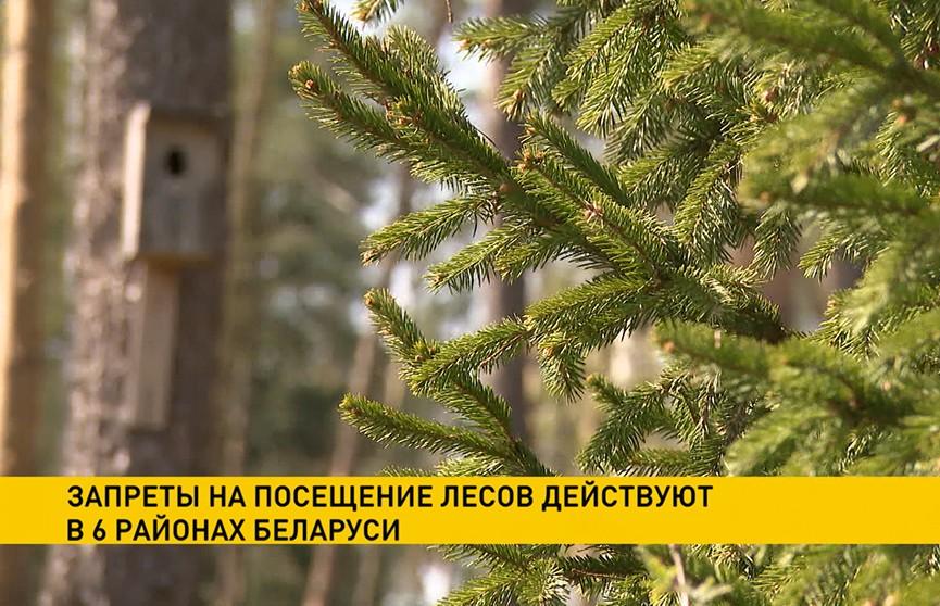 Запреты на посещение лесов действуют в шести районах Беларуси