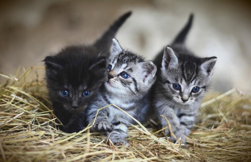 Мама-кошка захотела отдохнуть от котят, принесла их хозяйке и рассмешила всех (ВИДЕО)