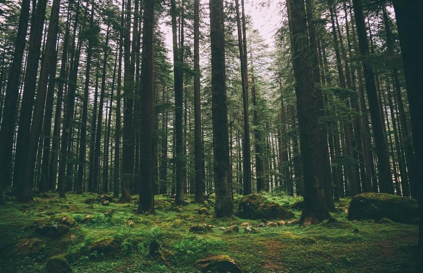 Как не заблудиться в лесу и что делать, если это произошло?
