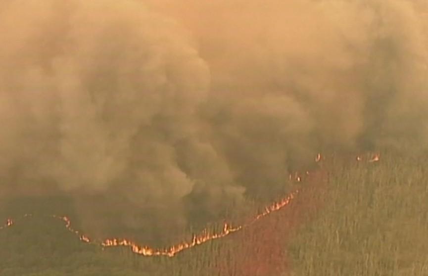 Пожары в Австралии: объявлено чрезвычайное положение
