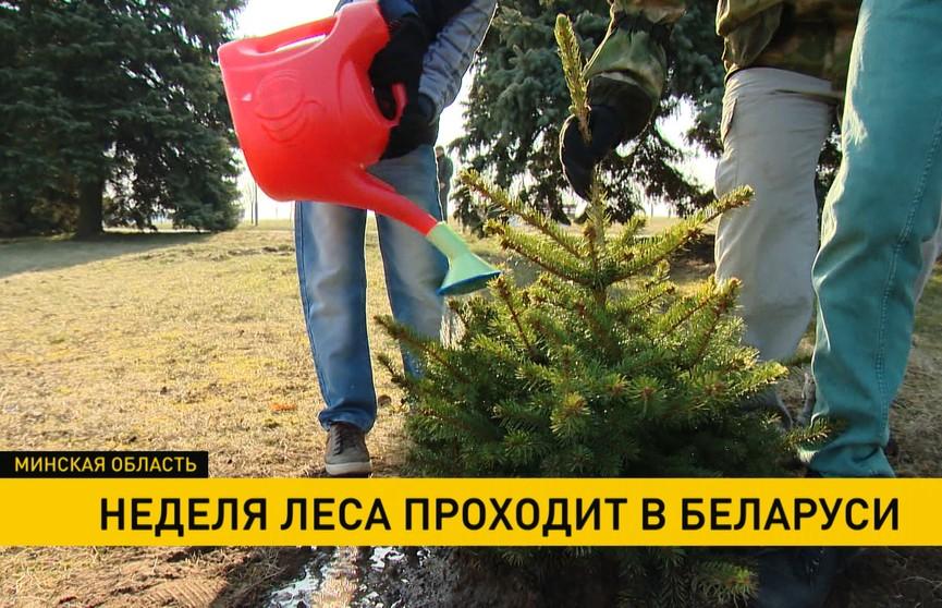 За «Неделю леса» белорусы засадят деревьями 3500 гектаров