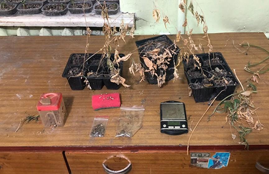 Лабораторию по производству марихуаны выявили в Гродненской области