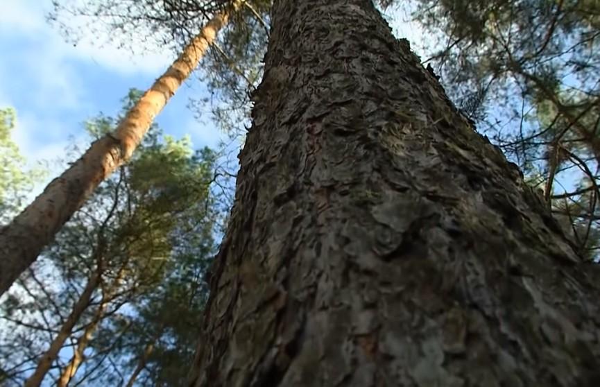 Любовь зла. Привязали скотчем к дереву из-за совместно нажитого имущества. Специальное расследование ОНТ