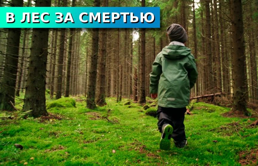 Неприятное приключение. Что делать, если заблудился в лесу?