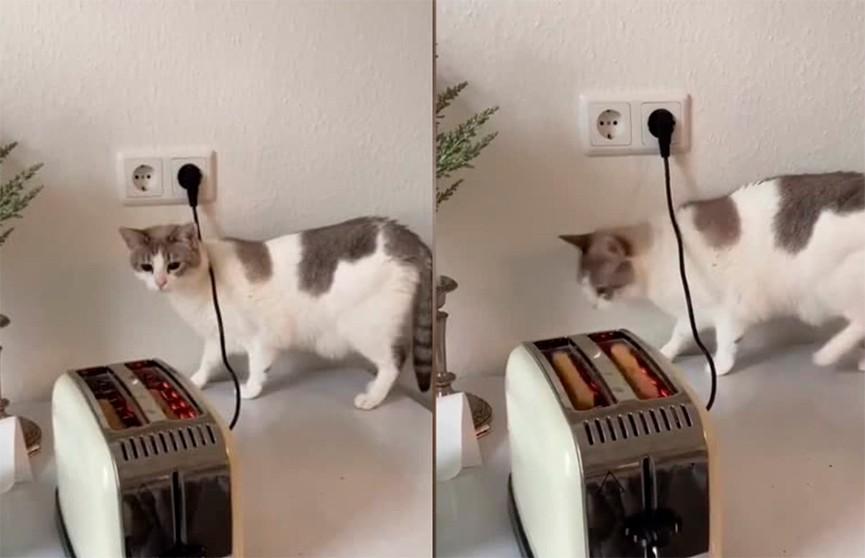 «Я не могу перестать смеяться!»: эмоциональная реакция кошки на тостер довела пользователей до слез