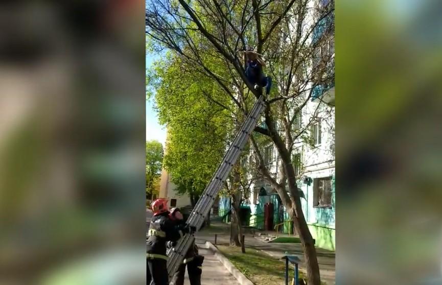 В Гомеле 12-летняя девочка застряла на дереве. К ней на помощь приехали спасатели