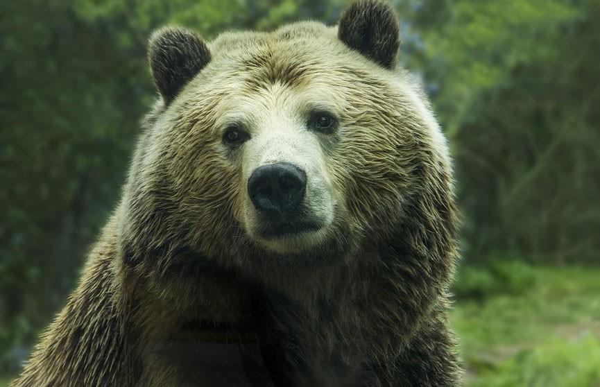 В Якутии 84-летняя женщина «перерычала» напавшего на нее медведя