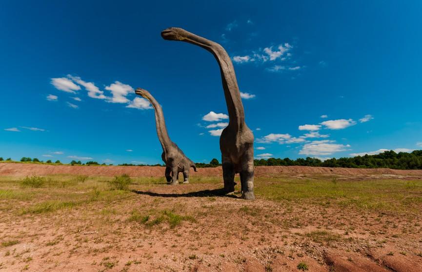 Останки крупного динозавра, жившего 140 млн лет назад, найдены в Аргентине