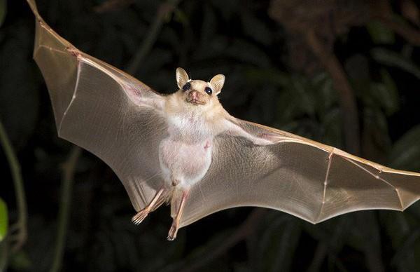 Летучая мышь устроила переполох в самолете (ВИДЕО)