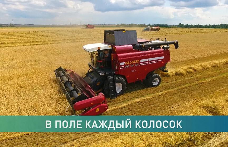 Они убирают хлеб: аграрии трудятся без выходных