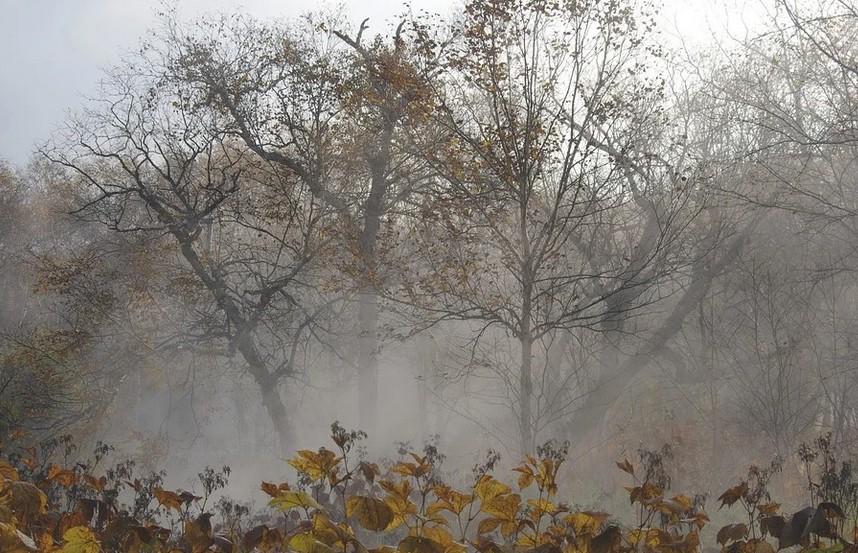 Зима близко? Ночные заморозки возможны в Беларуси уже на этой неделе