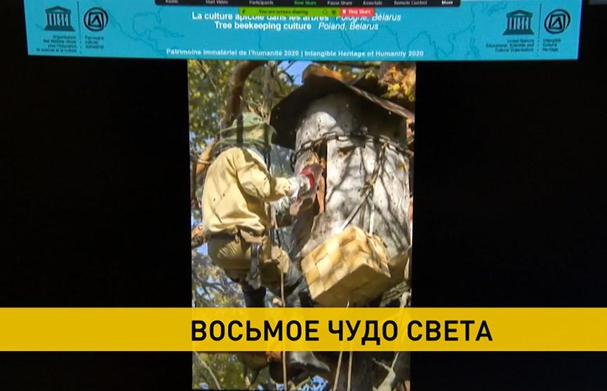 Белорусское восьмое чудо света: культуру бортничества внесли в Список нематериального культурного наследия человечества