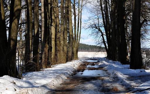 До +7°C будет в отдельных районах Беларуси 25 января