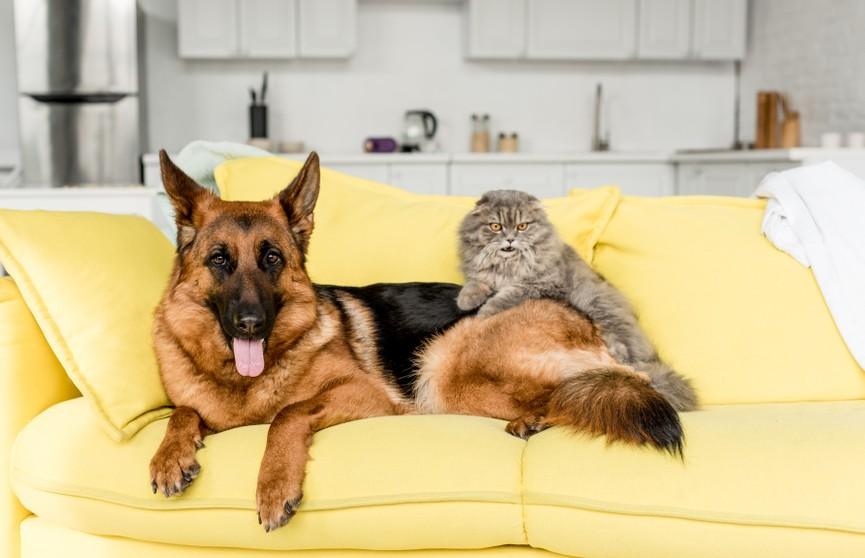 Собака проучила приставучего кота и рассмешила Сеть. Только посмотрите на это!