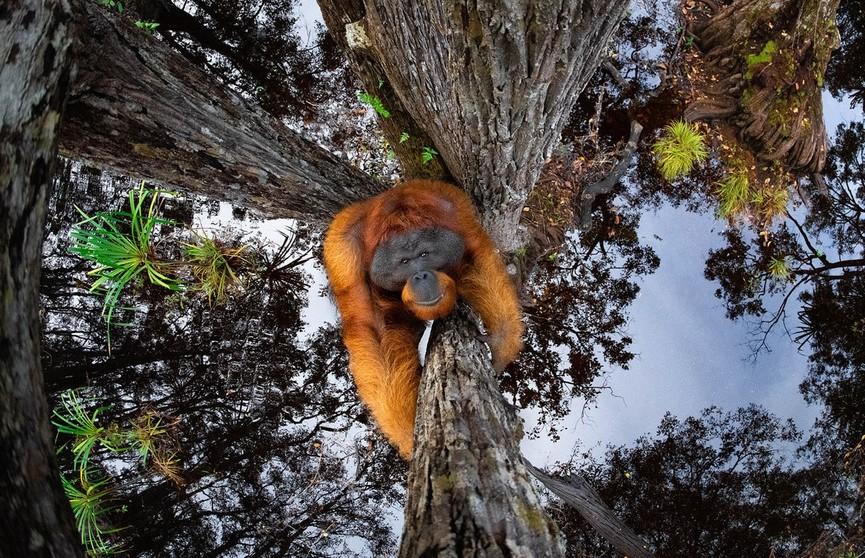 Названы победители конкурса на лучшее фото дикой природы - 2020. Вы только взгляните на эти работы!