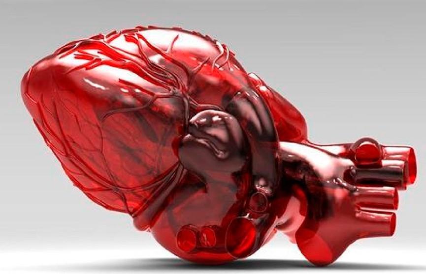 Человеческое сердце удалось напечатать на 3D-принтере
