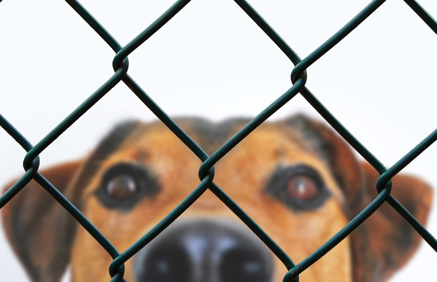 Самая искренняя улыбка: собака очень рада, что ее забрали из приюта