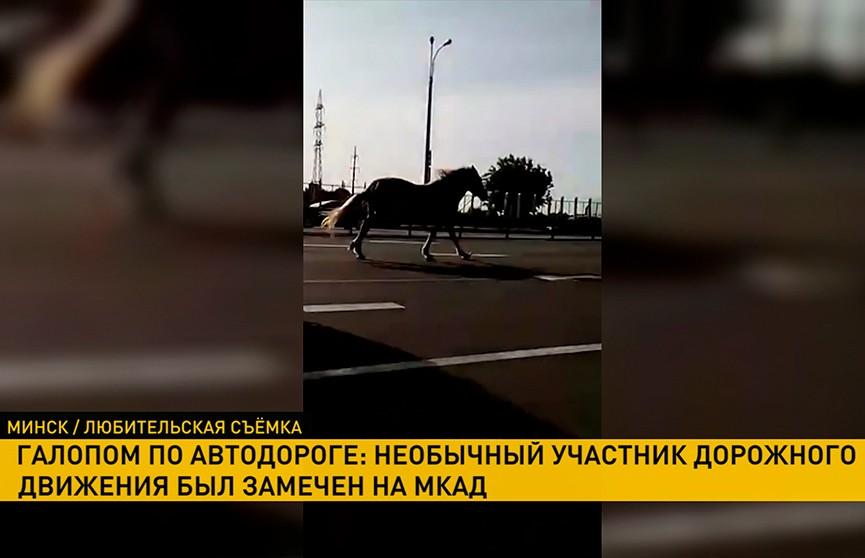 Лошадь галопом мчалась в Серебрянку по второй полосе МКАД (ВИДЕО)