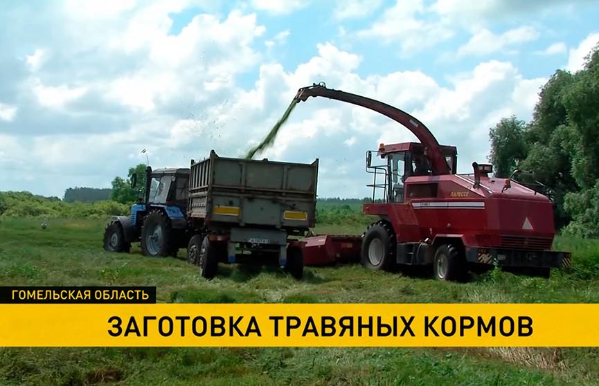 В Гомельской области аграрии приступили к заготовке кормов на будущий год