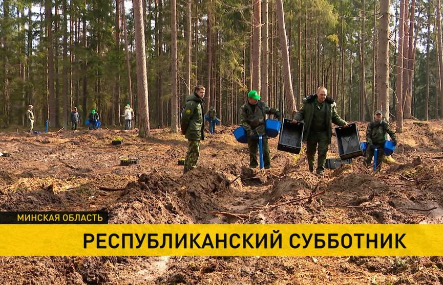 Сколько собрали белорусы на субботнике и куда перечислят эти деньги?
