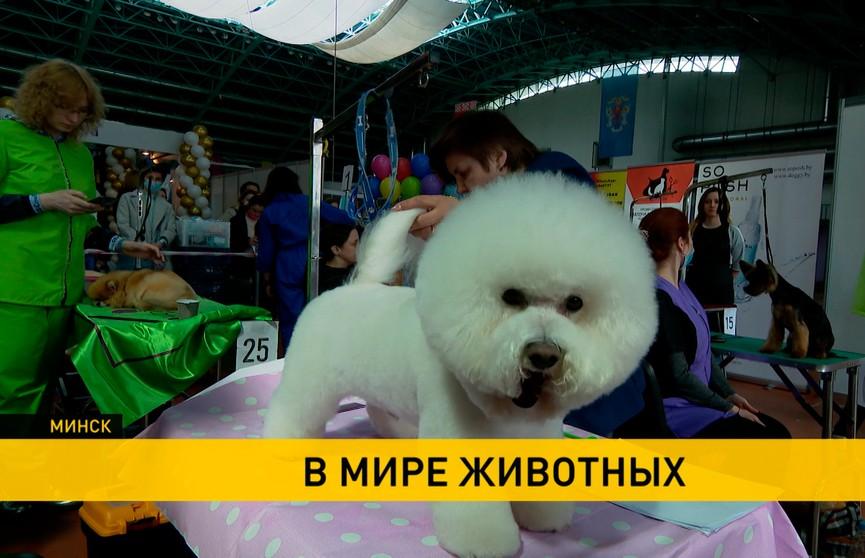 Как накормить, вылечить и одеть домашних питомцев: выставка «МирЗоо» открылась в Минске