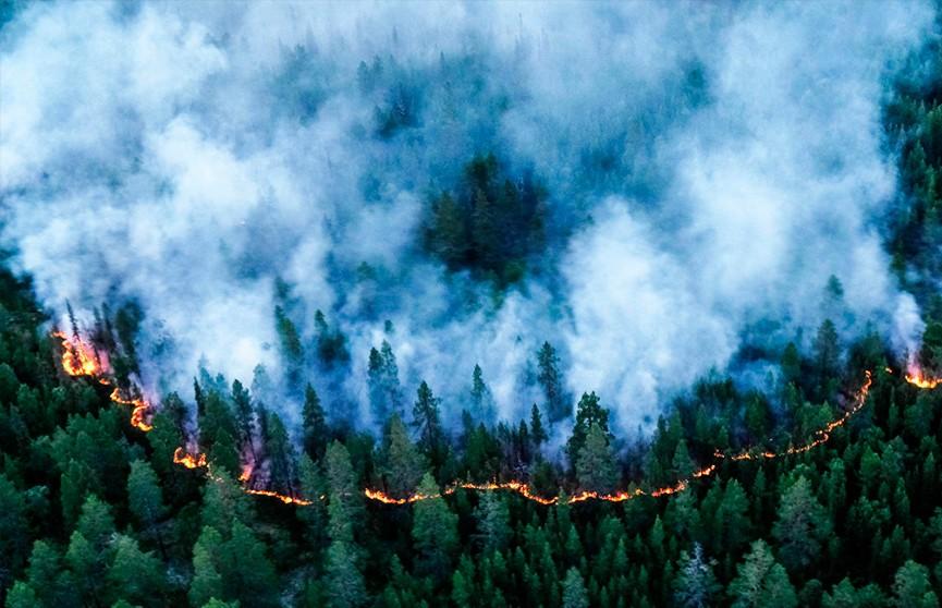 Сибирь в огне: более миллиона гектаров леса горит в России
