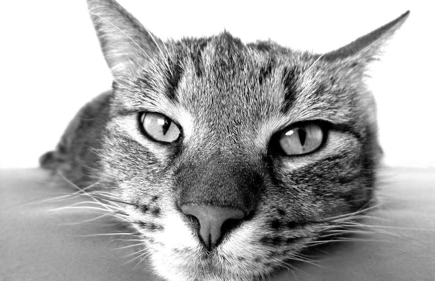 «В конце психанула»: уставшая от котят кошка рассмешила Сеть до слез