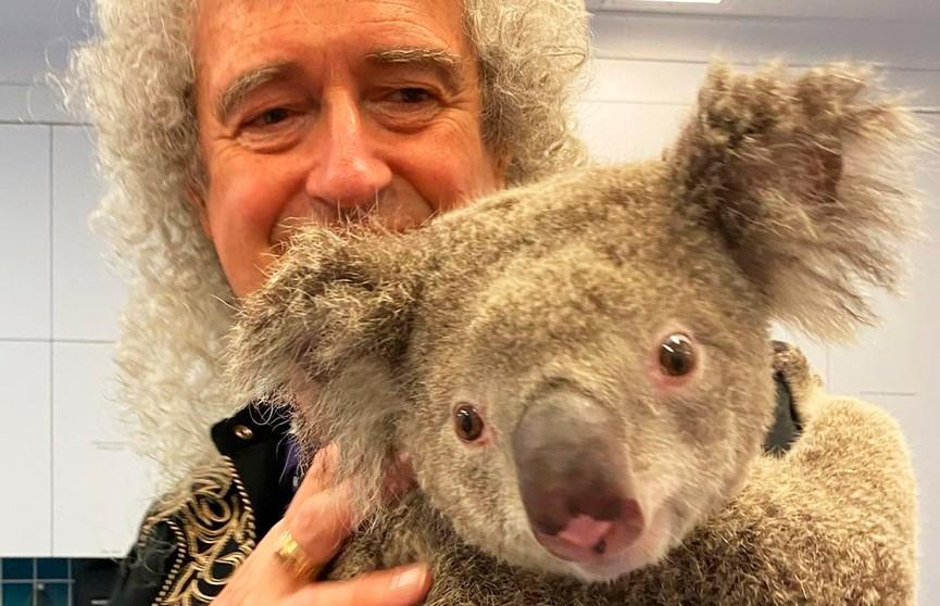 Уровень милоты зашкаливает: гитарист группы Queen сыграл для спасённой коалы (ВИДЕО)