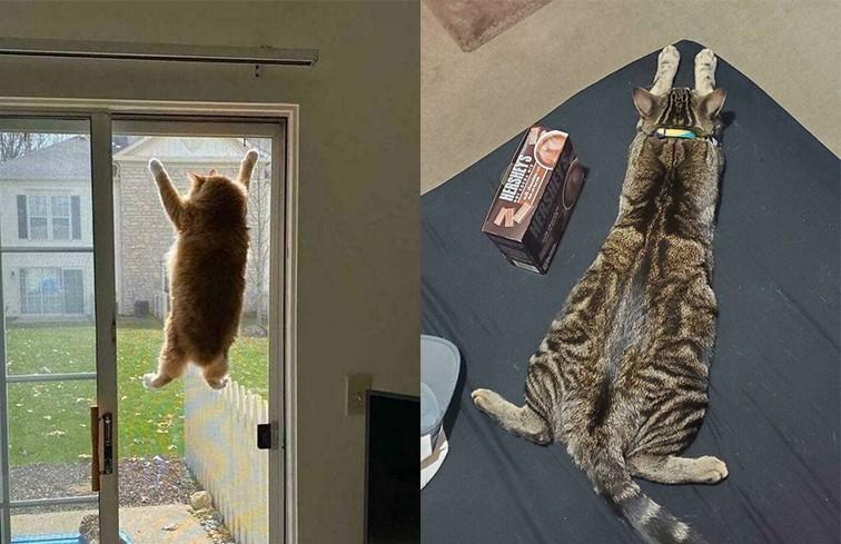 «У вас кот сломался»: фотографии пушистых питомцев, которые рассмешили Сеть до слез