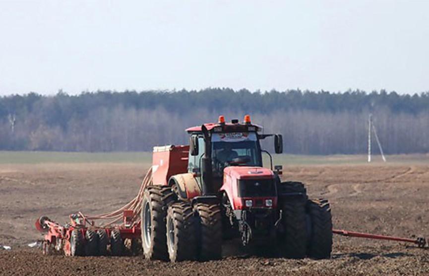Аграрии Гомельской области завершили сев ранних яровых зерновых и зернобобовых