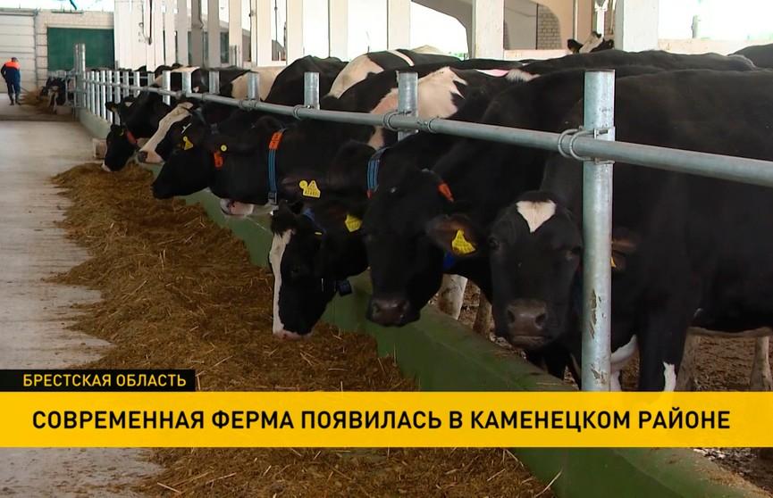 Современную ферму открыли в Каменецком районе