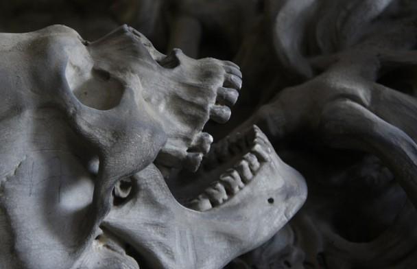Останки человеческого скелета в кукурузном поле обнаружил житель Пружанского района